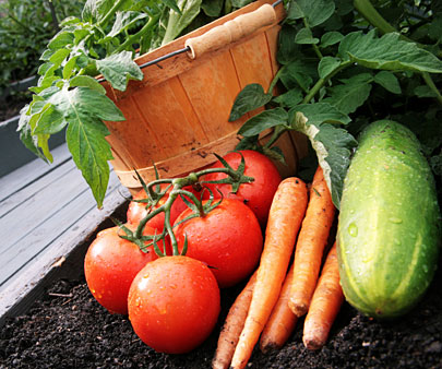 Top Reasons to Grow Your Own Produce