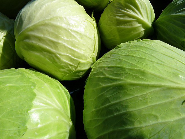 Phase 2 HCG Diet Recipe - Cabbage Salad