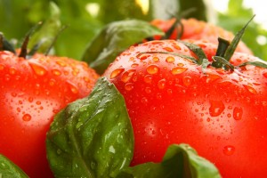 HCG Diet Tomato and Basil Soup